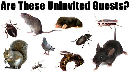 Bodine Pest Control